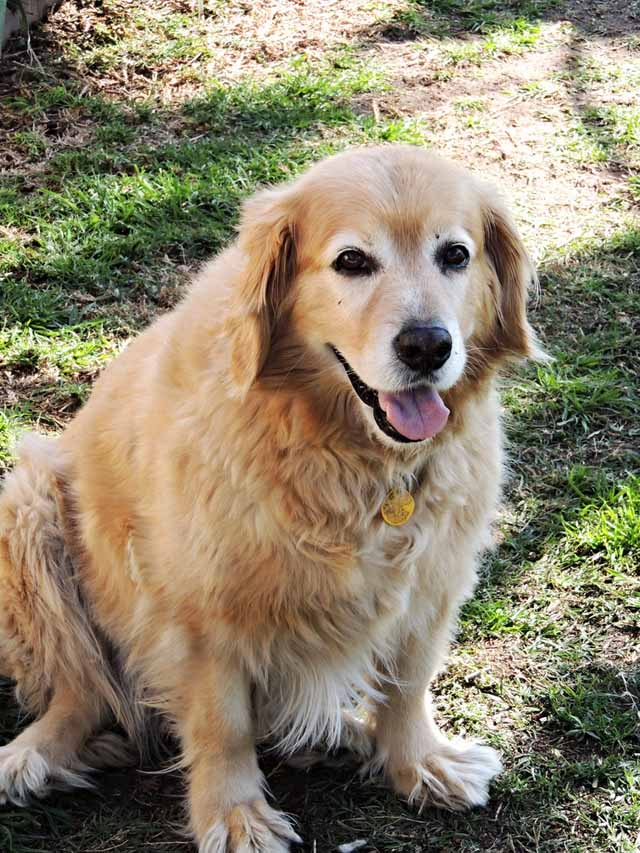 Here's What to Feed Your Senior Dogs #BrightMind